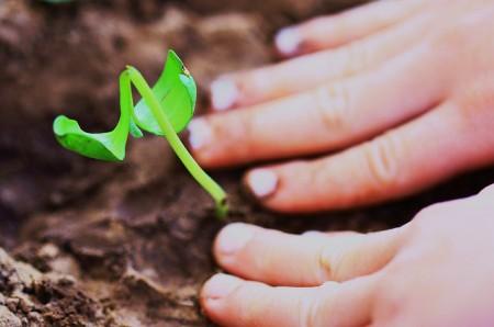 Planting seeds, starting afresh, new beginning
